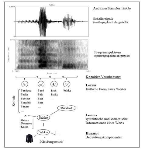 mentale-reprasentationsebenen-bei-der-verarbeitung-eines-auditiven-stimulus