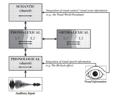 the-bilingual-language-interaction-network-for-comprehension-of-speech-blincs-model