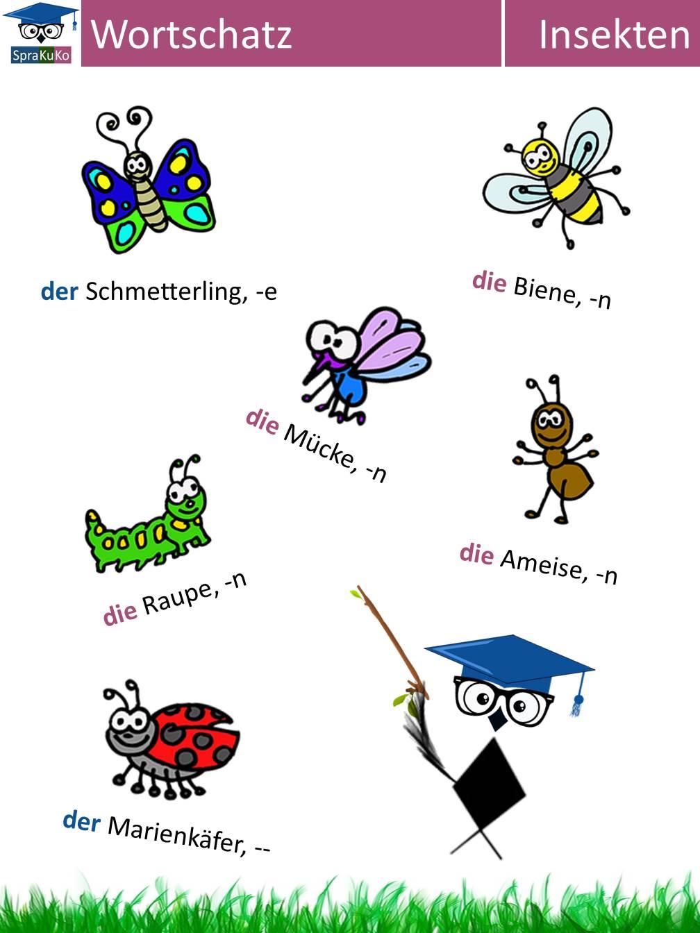 Wortschatz Insekten.jpg