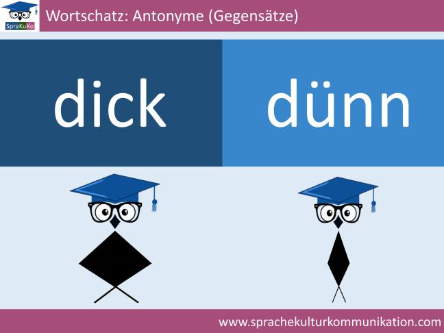 Wortschatz Adjektive Antonyme dick und dünn