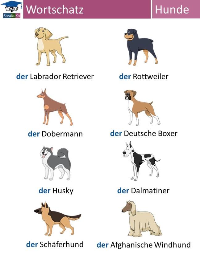 Wortschatz Hunde.jpg